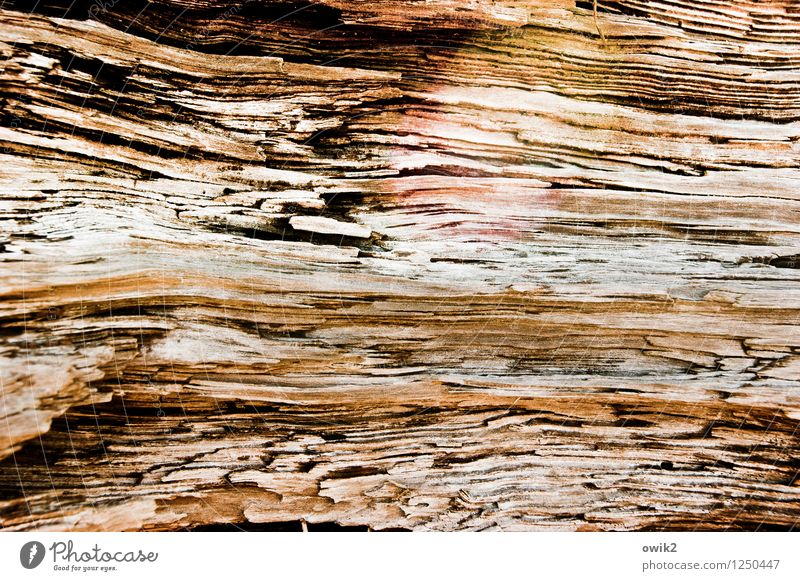 Under the skin Nature Tree Wood Old To dry up Near Natural Dry Wood grain Level Open Colour photo Subdued colour Exterior shot Close-up Detail