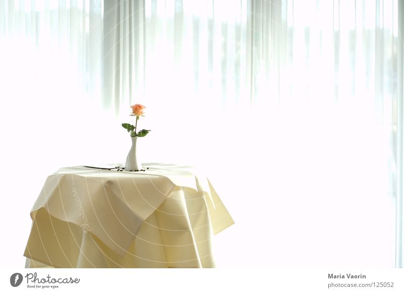A little flower for me - 100th anniversary photo. Hotel Serve Table Restaurant Meeting Conference room Flower Vase Loneliness Light Gastronomy Jubilee