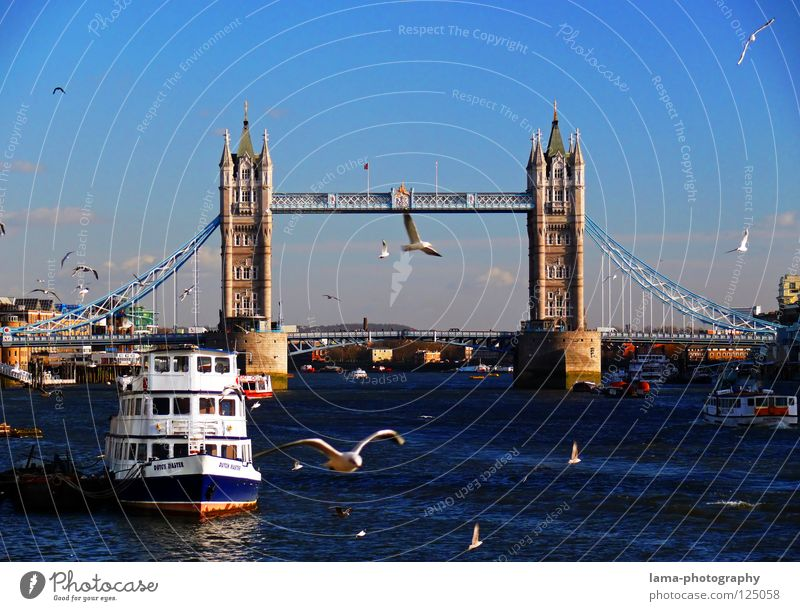 My London Tower Bridge England Themse Great Britain Art Sightseeing Suspension bridge Steel Construction Seagull Bird Watercraft Steamer Drop anchor Sun Town