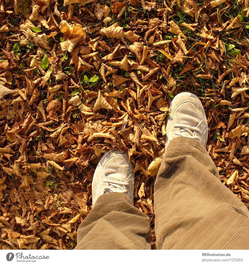 brown Autumn Cold Leaf Dry Dried Rustling To break (something) Footwear Pants Brown Earthy Sneakers Joy Going Stand Goodbye Loneliness Human being Transience