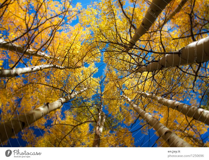 Sky Nature Vacation & Travel Blue Plant Tree Landscape Calm Forest Environment Yellow Sadness Autumn Dream Round Change