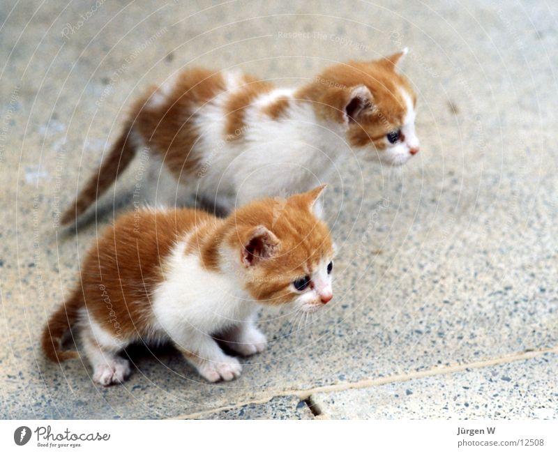 Animal Cat Small Sweet Pelt Mammal Multicoloured Child Land-based carnivore