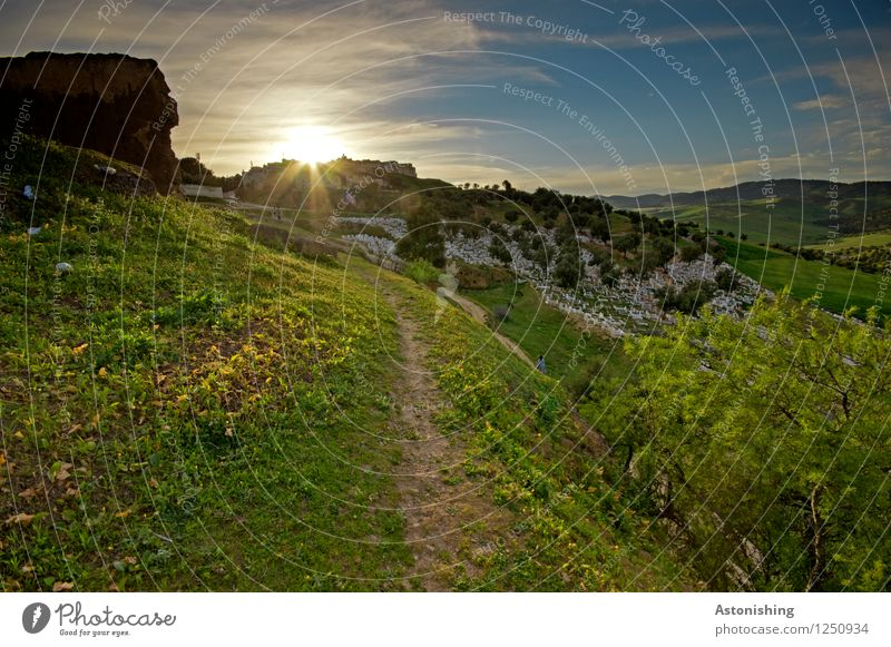 Sunset in Morocco Environment Nature Landscape Plant Air Sky Clouds Horizon Sunrise Sunlight Summer Weather Beautiful weather Warmth Tree Flower Grass Meadow