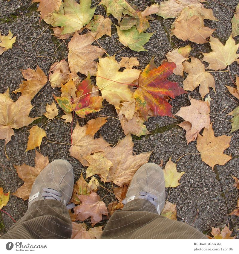 Joy Leaf Loneliness Cold Autumn Footwear Brown Going Stand Change Transience Pants Dry Goodbye Sneakers To break (something)
