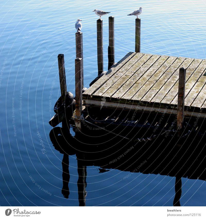 Water Beautiful Blue Wood Lake Bird Waves Clarity Footbridge Seagull Pole Lake Constance