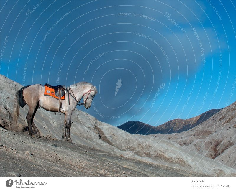 volcano horse Horse Eruption Asia Java Indonesia Equestrian sports Clouds Gray Adventure Animal Go up Exterior shot Mountain Mold Volcano Smoke mount bromo