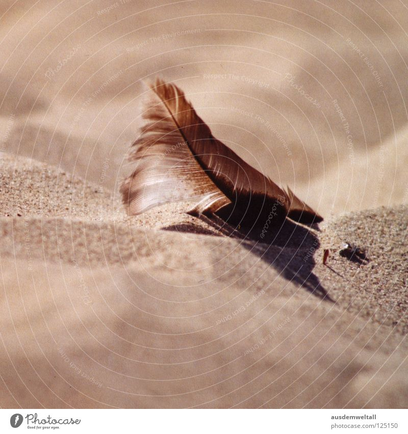 [Beige] Beach Summer Physics Beautiful Ahlbeck Usedom Macro (Extreme close-up) Close-up Coast Sand Feather Baltic Sea Warmth Lie Shadow Calm