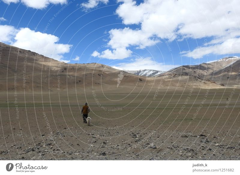 ...the lonely shepherd... Human being Masculine 1 Elements Sky Rock Mountain Himalayas India Ladakh Leh Animal Farm animal Sheep Goats Movement Going