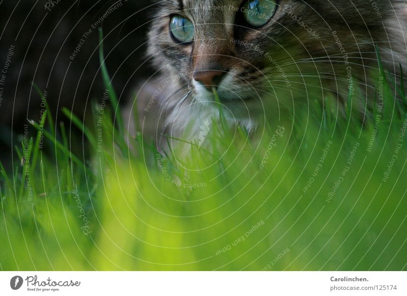 Laya. Joy Beautiful Summer Nature Animal Meadow Cat Bright Speed Green Mammal Exterior shot Free-living Prowl