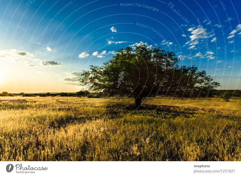 Sky Nature Vacation & Travel Blue Plant Sun Tree Landscape Clouds Environment Yellow Warmth Meadow Grass Natural Horizon