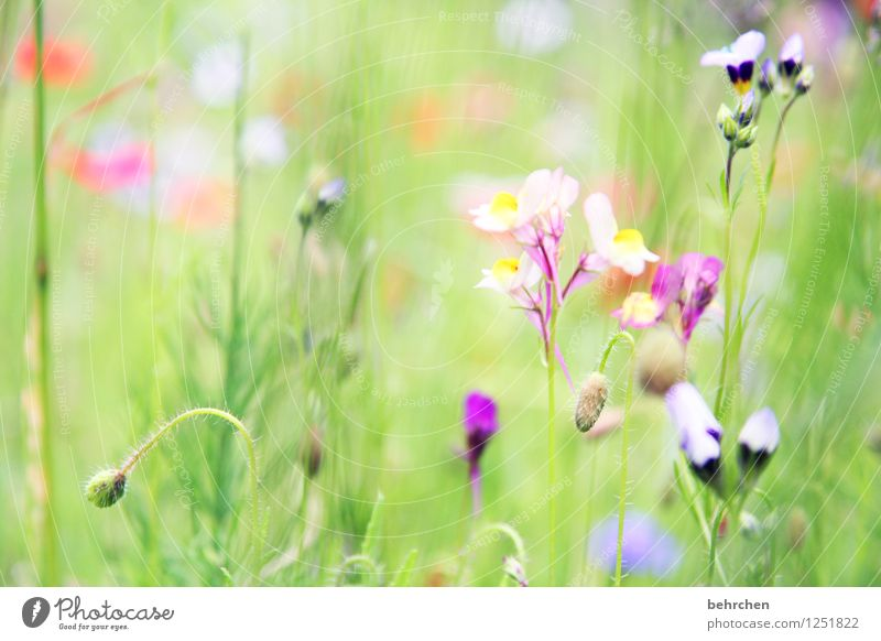 to dream Nature Plant Spring Summer Beautiful weather Flower Grass Leaf Blossom Garden Park Meadow Blossoming Faded Growth Green Violet Stalk Ease Summery Dream