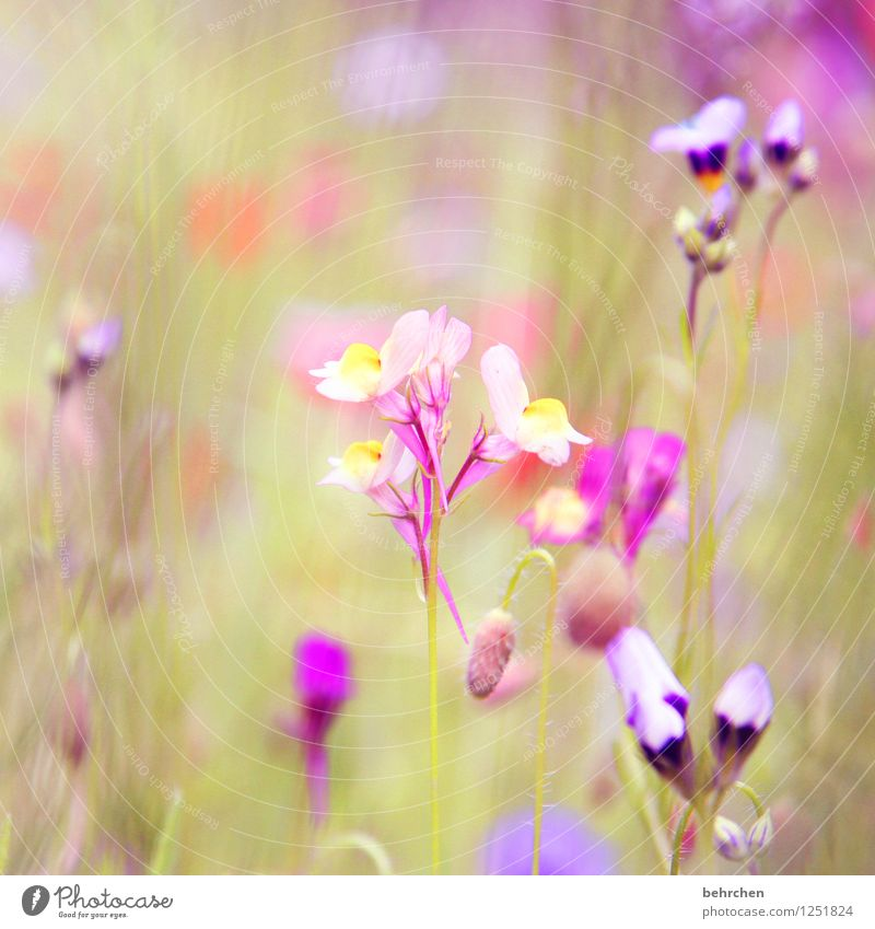 purple dream Nature Plant Spring Summer Beautiful weather Flower Grass Leaf Blossom Wild plant Garden Park Meadow Blossoming Fragrance Faded Growth Small Green