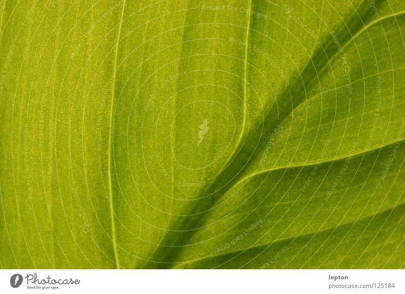 many paths lead to... Green Leaf Plant Juice Photosynthesis Macro (Extreme close-up) Close-up Railroad juice lane transmitted