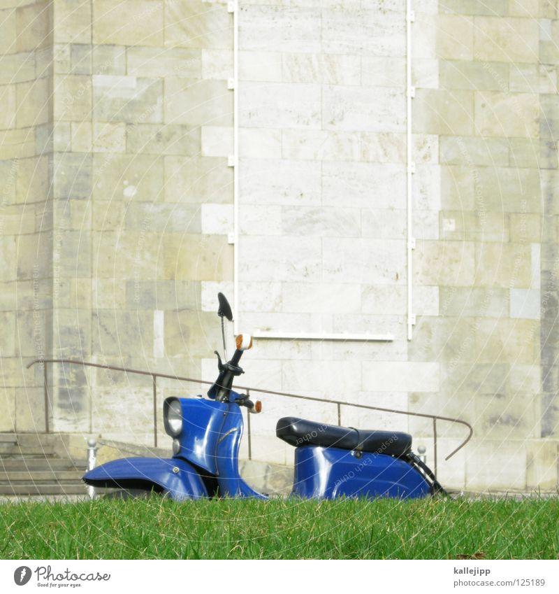 Nature Old Flower Blue City Plant Calm Relaxation Grass Garden Lanes & trails Park Landscape Environment Concrete Earth