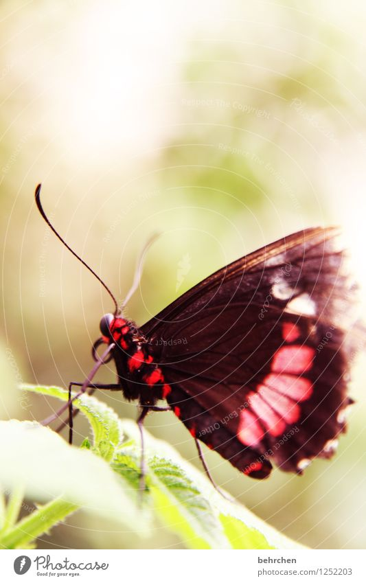butterfly Nature Plant Animal Spring Summer Tree Bushes Leaf Garden Park Meadow Wild animal Butterfly Wing 1 Observe Relaxation Flying To feed Exceptional