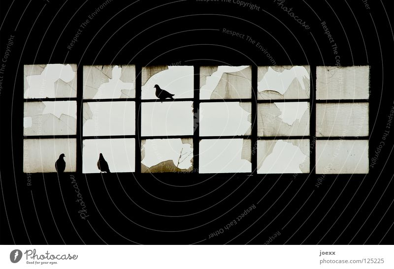 Loneliness Window Bird Glass Broken Industry Derelict Frame Window pane Pigeon Agree Pane Factory hall Shard Window frame