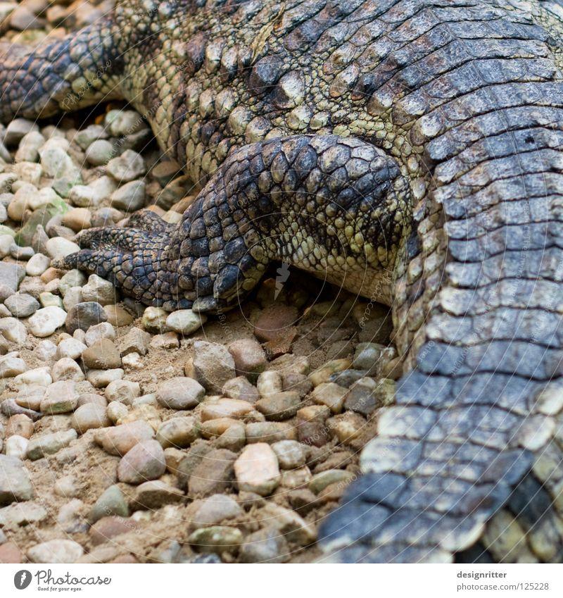 Animal Death Legs Skin Dangerous Threat Wild animal Hunting Leather Barn Crawl Reptiles Bag Kill Claw Hunter