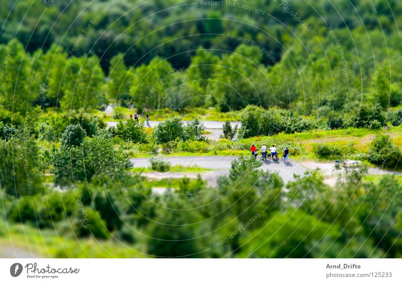 Human being Tree Green Summer Forest Group Lanes & trails Small To go for a walk Leisure and hobbies Sidewalk Surrealism The Ruhr Miniature