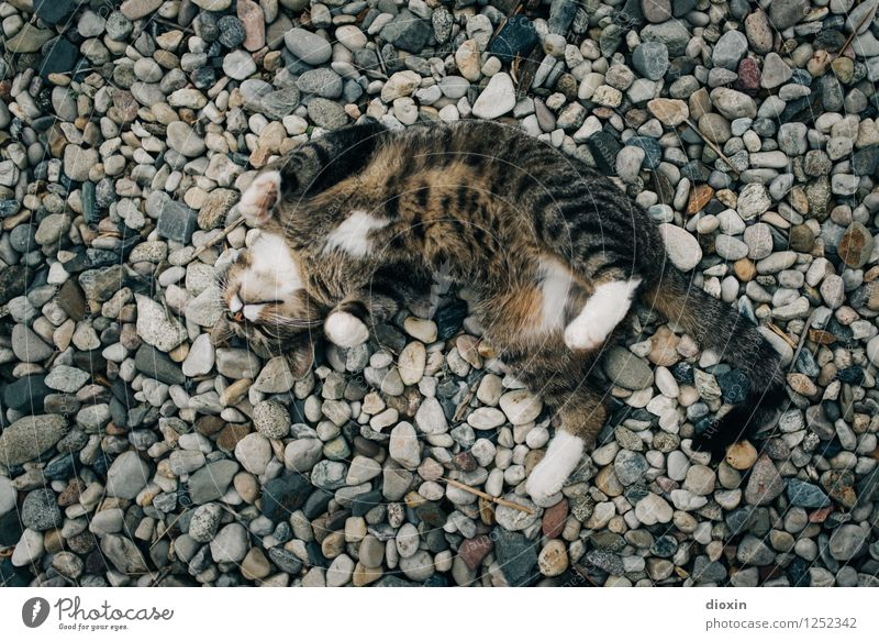 Cat Relaxation Animal Life Natural Stone Contentment To enjoy Joie de vivre (Vitality) Cute Passion Pet Cuddly Massage Gravel Pebble