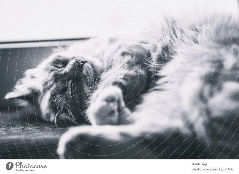 Cat Beautiful Relaxation Calm Animal Warmth Lie Dream Contentment To enjoy Cute Soft Sleep Wellness Serene Pet