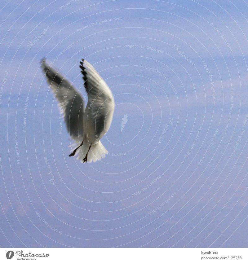 Sky White Blue Clouds Freedom Lake Bird Flying Feather Wing Seagull Lake Constance