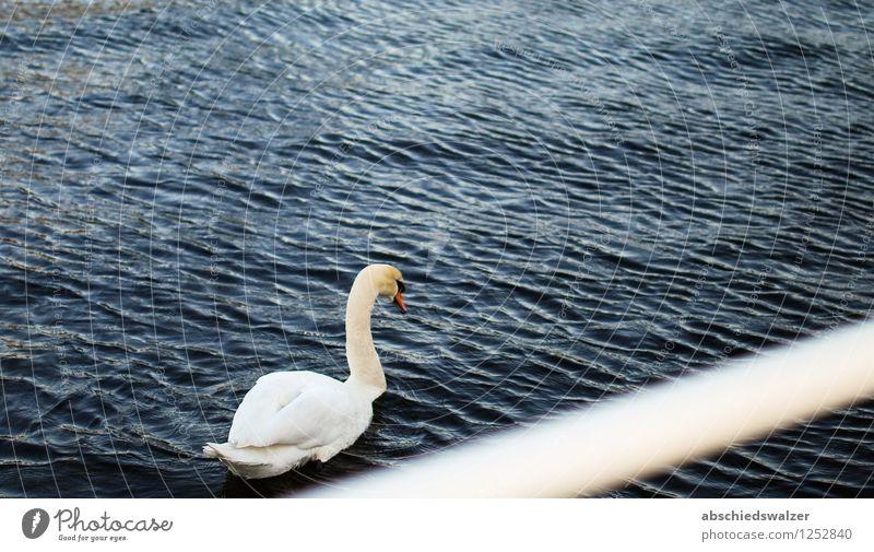 Loneliness Calm Animal Sadness Moody Elegant Uniqueness Boredom Pride Swan