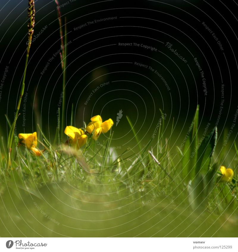 Mole takes a picture Meadow Green Yellow Blossom Blade of grass Calm Worm's-eye view Dandelion beautiful day