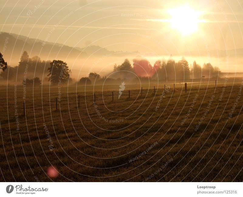 Sun Meadow Mountain Field Fog Alps Allgäu