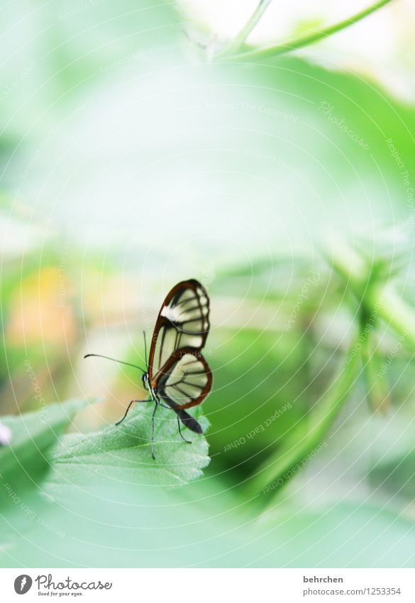overseeable? Nature Plant Animal Spring Summer Beautiful weather Tree Bushes Leaf Garden Park Meadow Wild animal Butterfly Wing glass wing butterfly 1 Observe