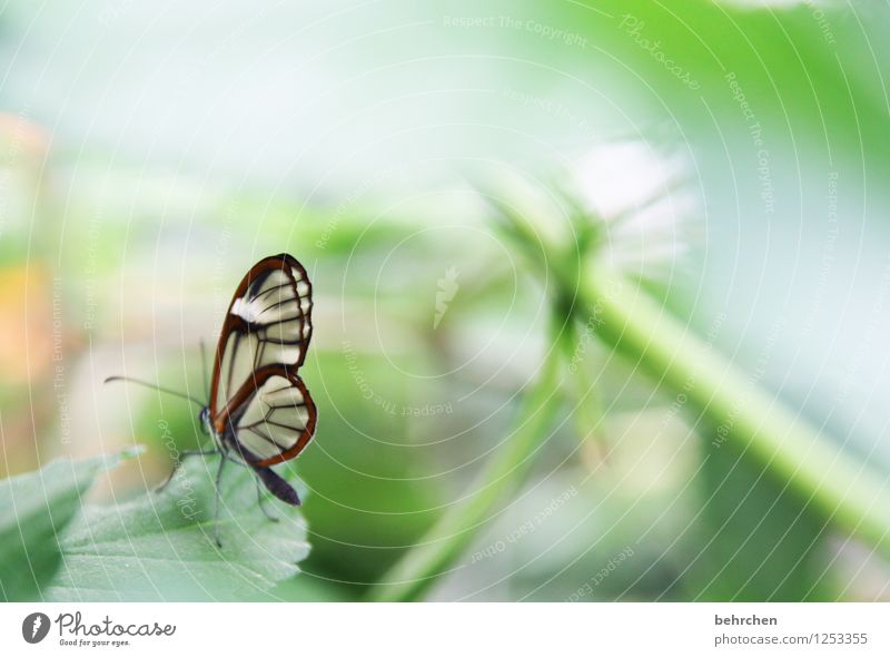 tiny beauty Nature Plant Animal Spring Summer Leaf Garden Park Meadow Wild animal Butterfly Wing glass wing butterfly Observe Relaxation Flying Sit Dream