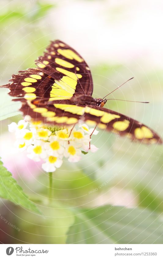 Nature Plant Green Beautiful Summer Flower Leaf Animal Yellow Spring Blossom Exceptional Flying Brown Wild animal Sit