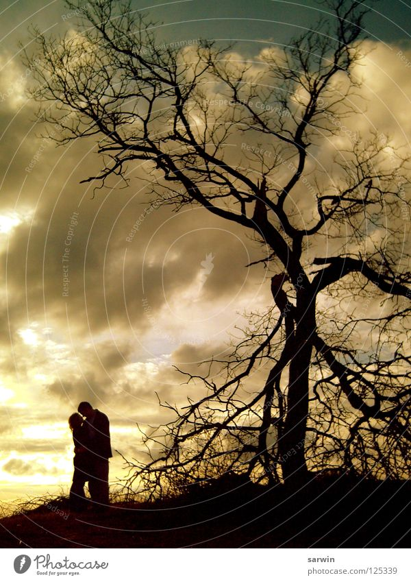 sunlight Tree Kissing Romance Sunset Clouds Valentine's Day Love Evening Couple Shadow siluette In pairs Lovers Together Relationship Trust Affection Harmonious