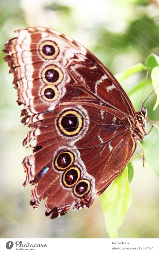 smash day Nature Plant Animal Spring Summer Beautiful weather Tree Leaf Garden Park Meadow Wild animal Butterfly Animal face Wing blue Morphof age 1 Observe