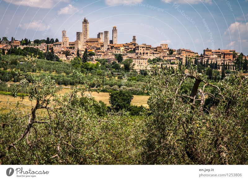 medieval Vacation & Travel Tourism Trip Sightseeing City trip Summer Summer vacation Environment Landscape Sky Olive tree Hill San Gimignano Italy Tuscany
