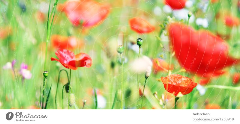 Nature Plant Green Beautiful Summer Flower Red Leaf Warmth Blossom Spring Meadow Grass Garden Bright Park