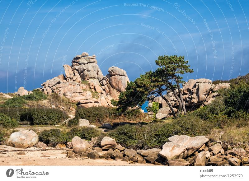 Nature Vacation & Travel Tree Relaxation Landscape Clouds Coast Stone Rock Tourism Tourist Attraction France Atlantic Ocean Granite Brittany