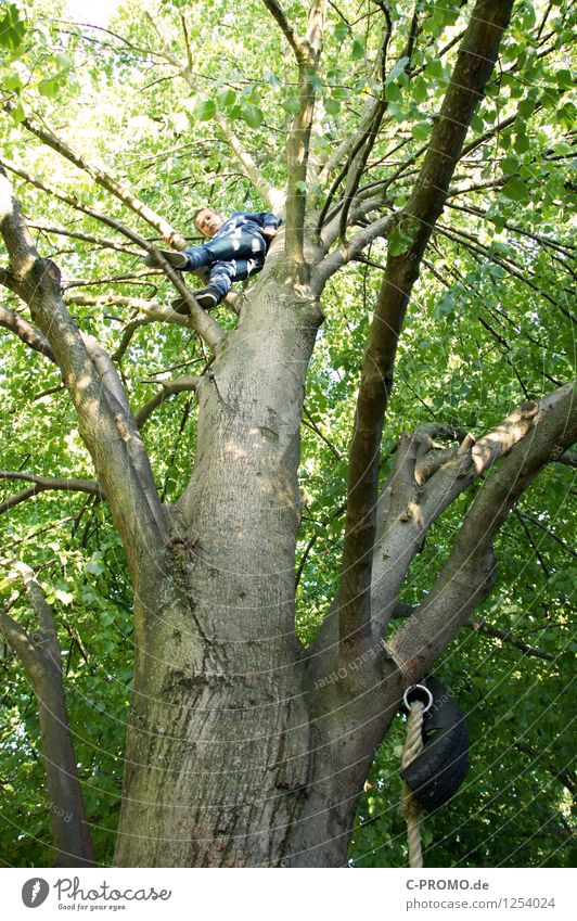 high up Human being Masculine Boy (child) Brother Infancy 1 3 - 8 years Child 8 - 13 years Tree Forest Wood Gigantic Tall Green Joy Happy Willpower Brave Trust