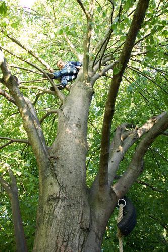 Human being Child Green Summer Tree Joy Forest Boy (child) Wood Happy Masculine Fear Infancy Tall Dangerous Threat