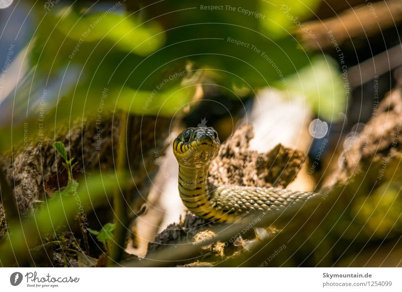 Nature Plant Summer Leaf Animal Environment Weather Wild animal Climate Beautiful weather Tree trunk Twig Animal face Snake Scales Ring-snake