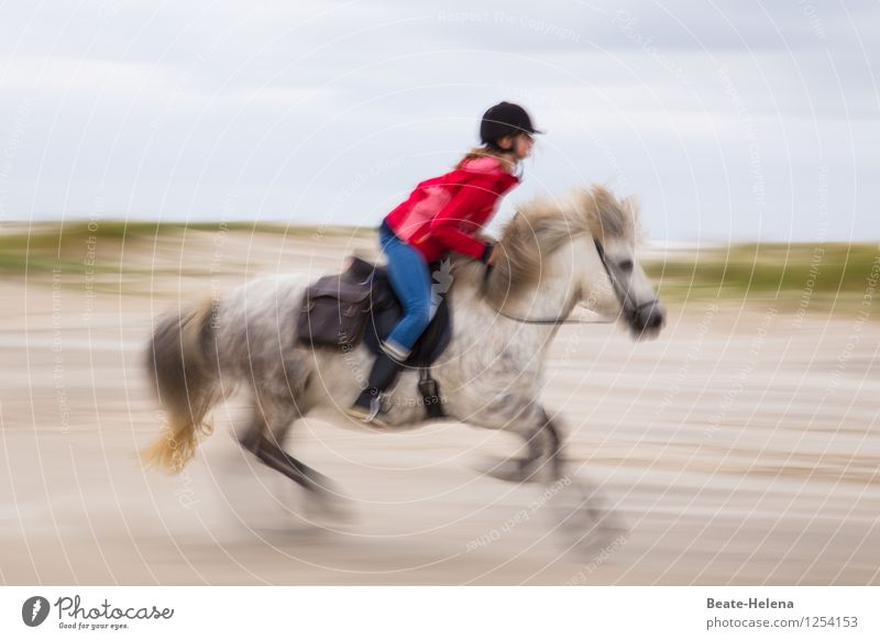 Nature Vacation & Travel White Red Joy Beach Black Coast Sports Freedom Lifestyle Brown Sand Weather Speed Horse
