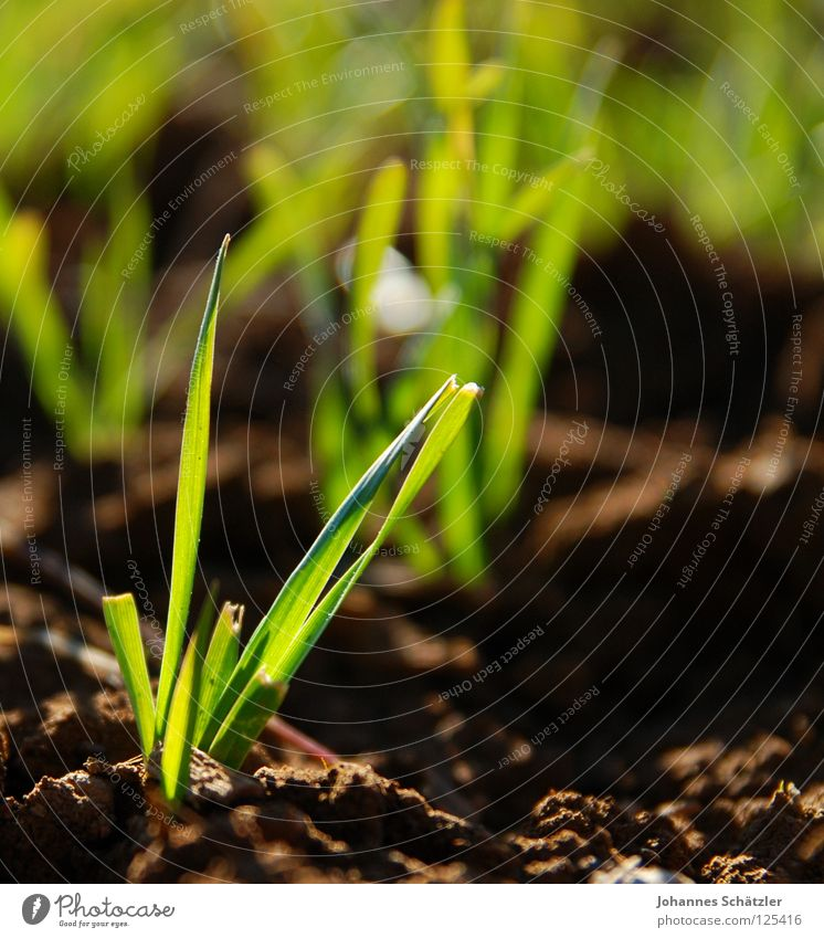 Green Meadow Jump Grass Spring Field Earth Agriculture Blade of grass Juicy Sowing Spring fever Sow