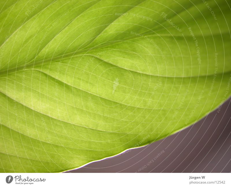 Nature Green Plant Leaf