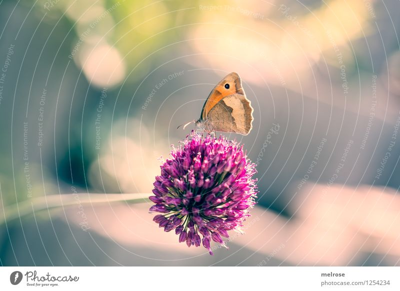 Nature Green Beautiful Summer Relaxation Animal Blossom Style Garden Pink Glittering Contentment Illuminate Elegant Gold Wing