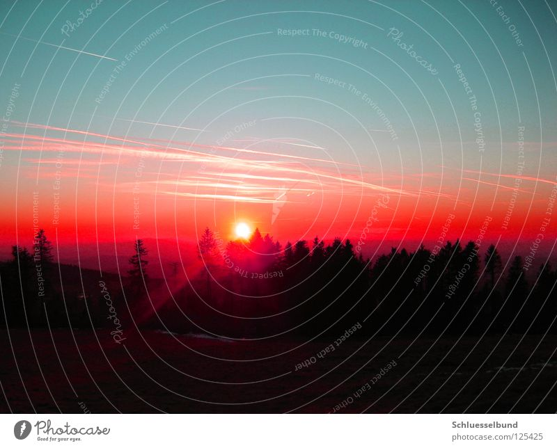 Sky Nature Blue Tree Red Sun Black Forest Dark Landscape Warmth Bright Orange Horizon Fog Vapor trail