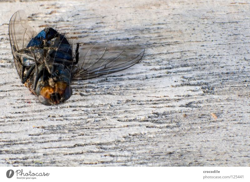 when flying no longer fly.... :( Insect Crashed Wood Macro (Extreme close-up) Grief Distress Close-up Fly Flying Aviation break pilot Death Wing