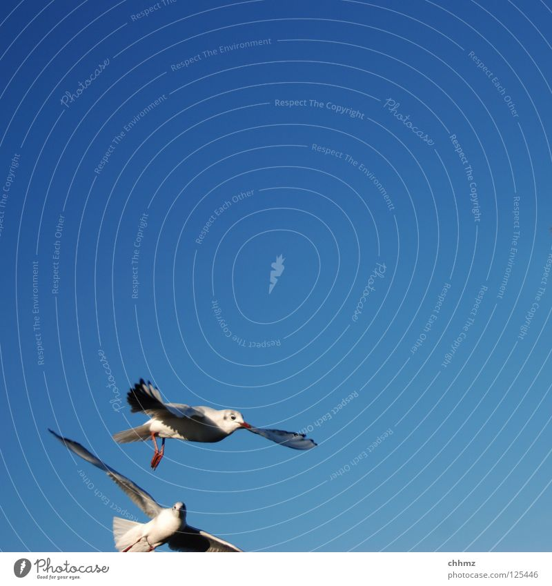 Funny first cut Seagull Bird Sailing Hover Ocean Lake Speed Beautiful Esthetic Tasty Far-off places Flying Aviation River Partially visible aerial combat attack