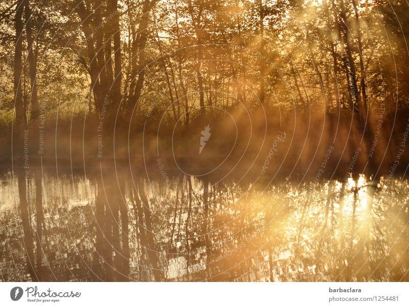 400 | Favourite sunrise pond Nature Landscape Water Sun Autumn Beautiful weather Tree Bushes Lake Pond Illuminate Gold Moody Beginning Energy Hope Calm