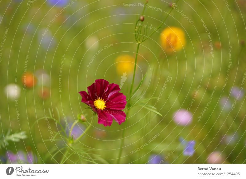 KaPing! Environment Nature Summer Plant Flower Grass Meadow Emotions Moody Joy Happiness Red Blossom Multicoloured Green Yellow Flashy Colour photo