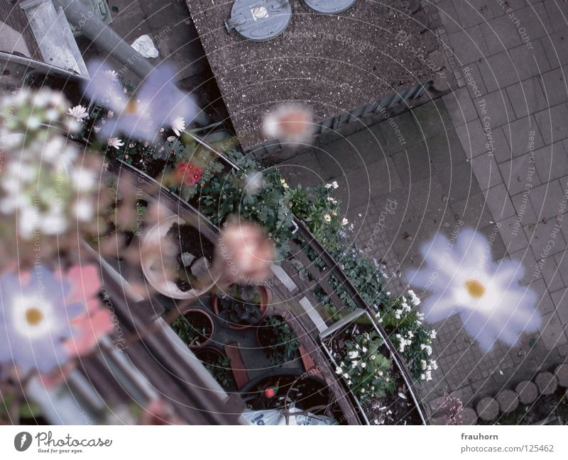 Blue Flower Blossom Metal Concrete Gloomy Handrail Asphalt Violet Blossoming Herbs and spices Balcony Deep Cobblestones Arch Flowerpot