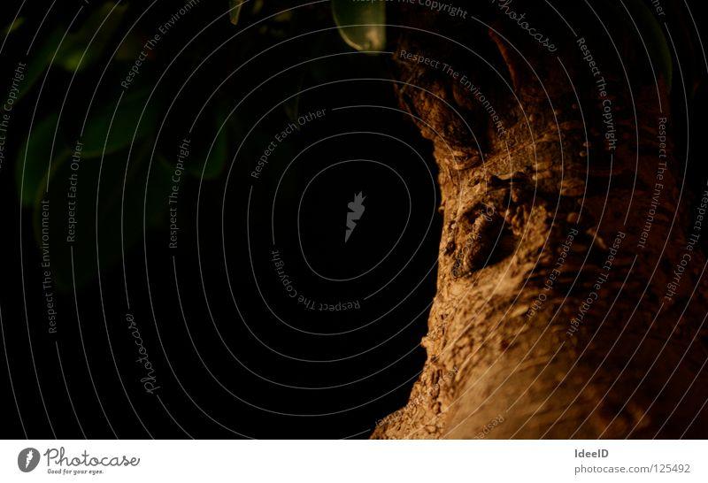 Nature Green Tree Leaf Black Landscape Dark Wood Brown Branch Creepy Hollow Tree bark Crust Bonsar Leaf canopy